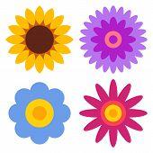 picture of chrysanthemum  - Flower icon set  - JPG