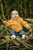 Baby Girl In The Corn Stalks