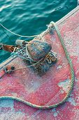 pic of bollard  - Bollard and rope on a commercial fishing pier - JPG