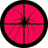 In the Scope Series - Spider