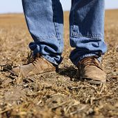 Feet shot of man wearing workboots standing in soybean field.