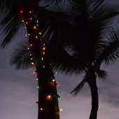 Festive colored lights wrapped around trunk of palm tree at beach.