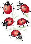 Set of ladybirds