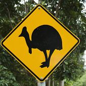 Road sign for cassowary bird crossing in forest.