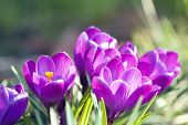 stock photo of rich soil  - rich spring flowers - JPG