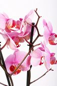 image of flower arrangement  - Orchid - JPG