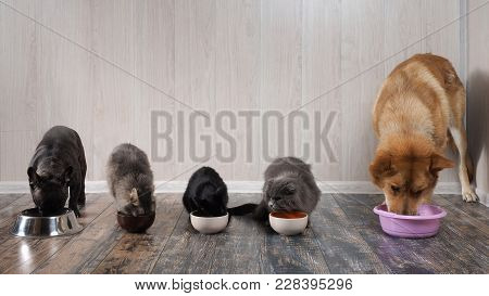 poster of Many Cats Amany Cats And Dogs Eat Pet Food From Bowls