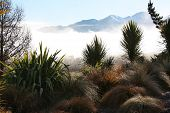 Winter morning tussock