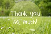 English Text Thank You So Much. Spring Or Summer Gras Meadow With Daisy Flowers. Blurry Trees As Bac poster