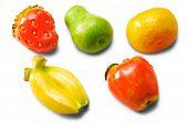 Magnet Fruit