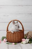 Easter Bunny Rabbit In Basket With Spring Flowers On White Wooden Planks, Easter Holiday Concept. poster