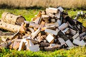 Pile Of Firewood. Preparation Of Firewood For The Winter. Background. Firewood In The Forest. Firewo poster
