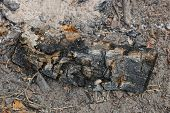 One Black Charred Log Lies In The Gray Ashes Of An Extinct Fire poster