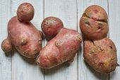 Trendy Ugly Organic Conjoined Siamese Potatoes From Home Garden On A White Wooden Background.ugly Ve poster