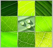 Collage Green Leafs Water Drops On Grey