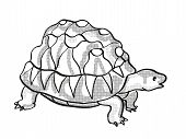 Retro Cartoon Mono Line Style Drawing Of A Radiated Tortoise, An Endangered Wildlife Species On Isol poster