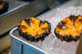 Fresh Sea Uni Urchin On Ice, Sell At Tsukiji, Japan Fish Market, Tokyo, Japan Raw Uni Urchin Sashimi poster