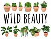 Wild Beauty Banner. Set Of Hygge Potted Succulent Plants Postcard. Cozy Scandinavian Style Collectio poster