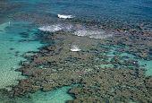 Hanauma Bay reef