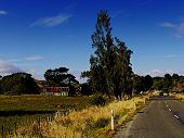 a typical New Zealand rural scene