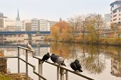 Pigeons And City