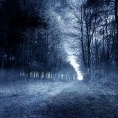 Haunted Wald