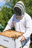 Young male beekeeper in protective workwear carrying honeycomb frames in crate at apiary