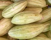 picture of muskmelon  - fresh green muskmelons for sale - JPG