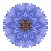 picture of kaleidoscope  - Blue Chrysanthemum Mandala Flower Kaleidoscope Isolated on White Background - JPG
