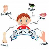 stock photo of senses  - vector illustrating an educational concept  of the five senses - JPG