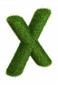 Natural grass letter X