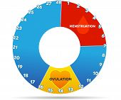 stock photo of contraception  - Menstrual cycle graphic - JPG