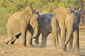 Elephant, African - Wildlife Background from Africa - Play time in Nature's Kindergarten of fun