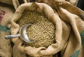 Raw Coffee Seeds Bulk Scoop Burlap Bag Agriculture Bean