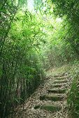 pic of bamboo forest  - Green Bamboo Forest  - JPG