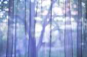 pic of lace-curtain  - Purple transparent curtain on a window - JPG