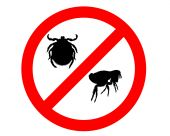 stock photo of flea  - Prohibition sign for fleas and ticks on white background - JPG