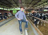Cowboy and Cows, Farming