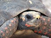 pic of close-up  - turtle up close - JPG
