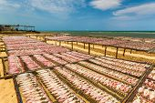 stock photo of squid  - Dried Squid traditional squids drying in the sea and blue sky in a idyllic fishermen villageThailand - JPG