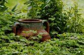 Pot Among Wet Trefoils