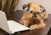 Dog In The Headphones With Microphone