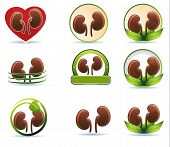 Huge Set Of Kidneys Icons