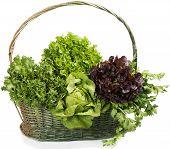 Lettuce With  Celery