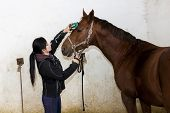 equestrian combing the horse