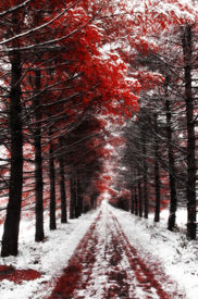 foto of coitus  - A bloody autumn in the park - JPG