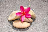 Flower Plumeria Or Frangipani With Stone On Floor