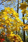 Branches Of Beautiful Autumn Trees