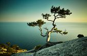 picture of crimea  - Tree and sea at sunset - JPG