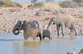Elephant Family At Okaukeujo